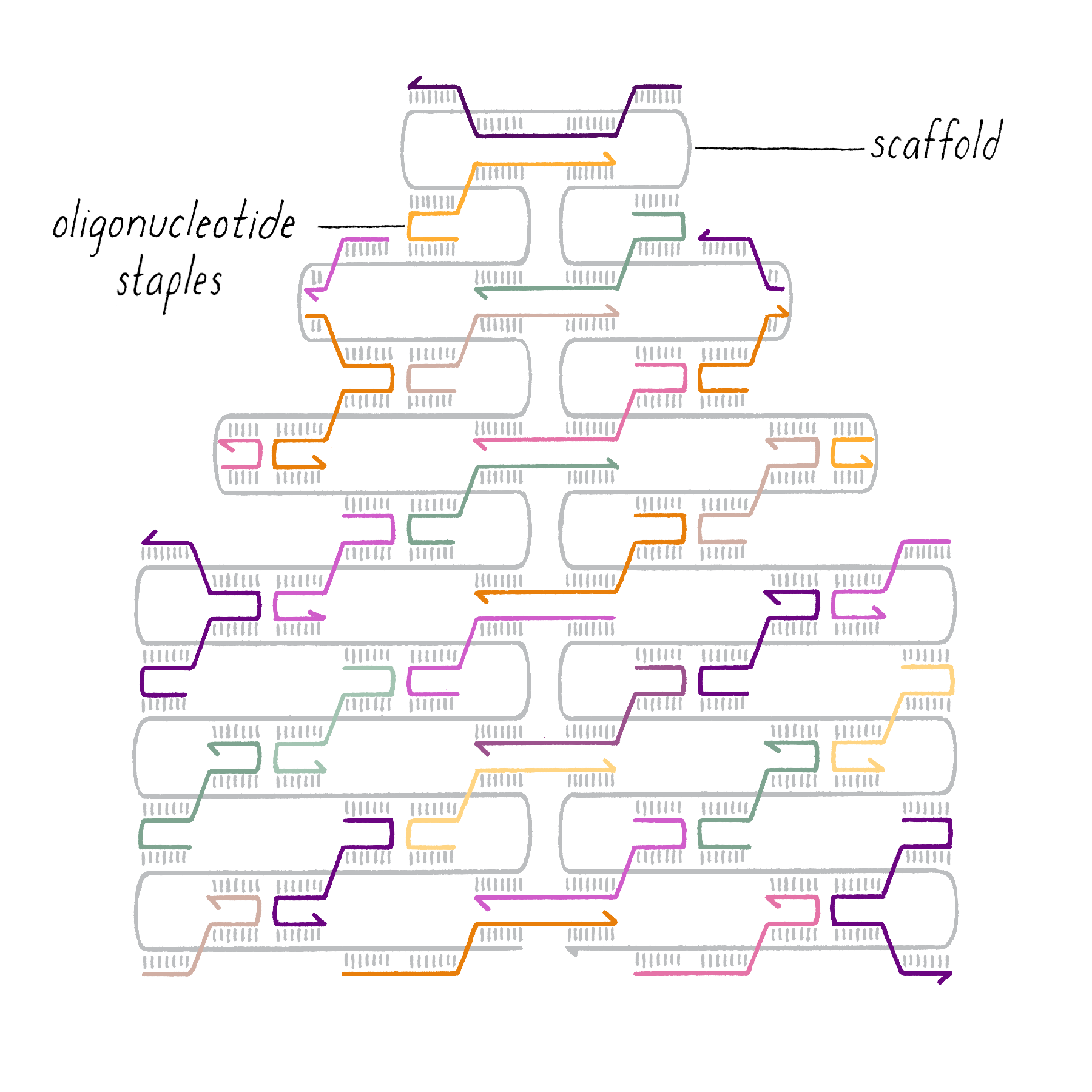 Dna Origami Template Microsoft Word - Fill Online, Printable ... | 1800x1800